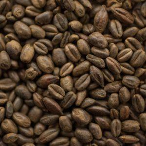 800-EBC Roasted Wheat (1 lb) - Thomas Fawcett & Sons